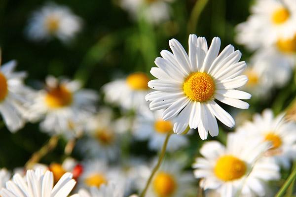 Весна фото красивые - удивительная природа, смотреть фото 5