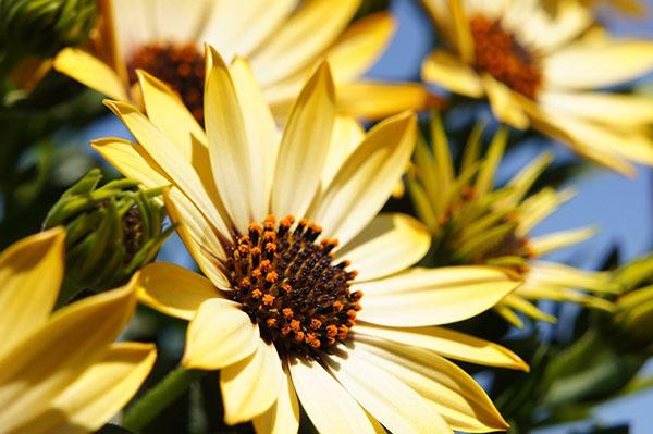 Весна фото красивые - удивительная природа, смотреть фото 6