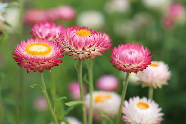 Весна фото красивые - удивительная природа, смотреть фото 9