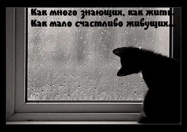 Киргизские картинки с надписями грустные, коллеге днем