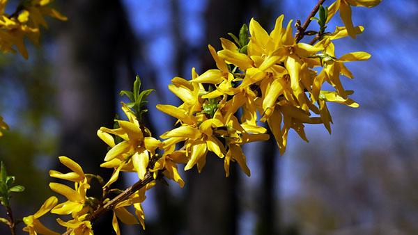 Весна фото красивые - удивительная природа, смотреть фото 12