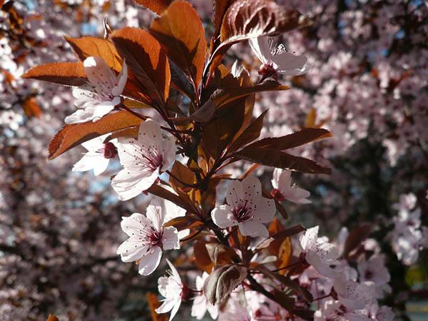 Весна фото красивые - удивительная природа, смотреть фото 14