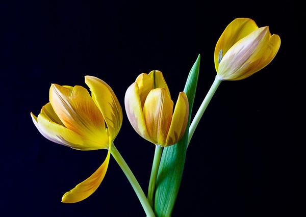 Весна фото красивые - удивительная природа, смотреть фото 17