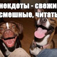 Анекдоты - свежие, смешные, читать бесплатно, до слез заставка