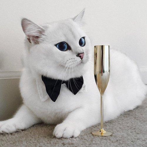 Белый кот с голубыми глазами - красивые фото, картинки, смотреть 17