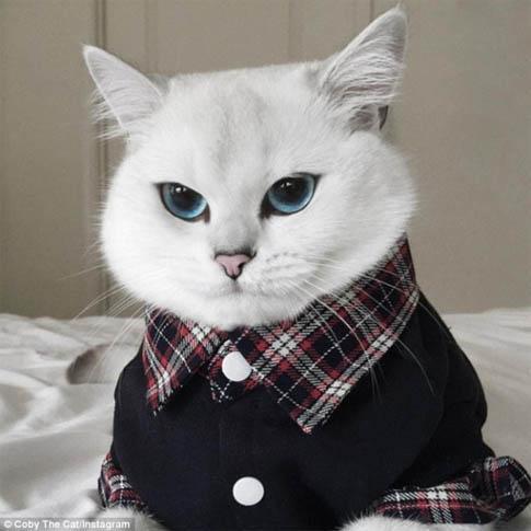Белый кот с голубыми глазами - красивые фото, картинки, смотреть 9