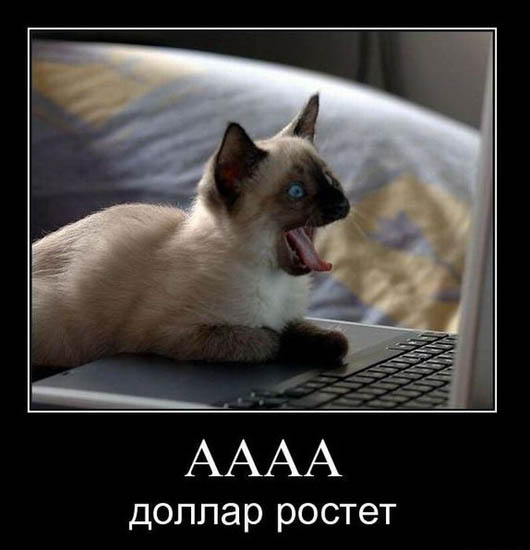 Веселые и смешные демотиваторы про животных - смотреть онлайн 5