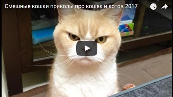 Видео приколы с кошками - смешные до слез, смотреть бесплатно