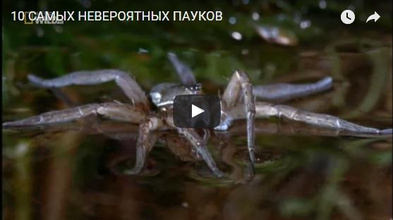 Видео про пауков интересное для детей - смотреть бесплатно