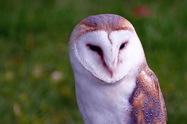 Восхитительные и красивые - картинки природы и животных 10