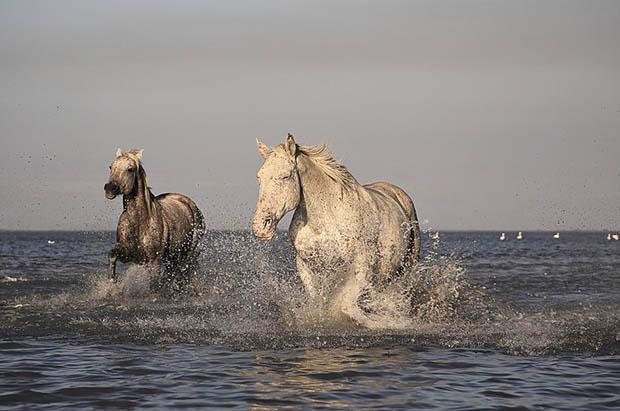 Восхитительные и красивые - картинки природы и животных 12
