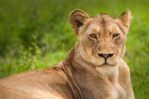 Восхитительные и красивые - картинки природы и животных 4