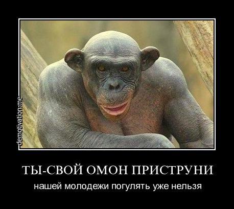 Картинки и фото обезьян - приколы, юмор, смех, с надписями 12