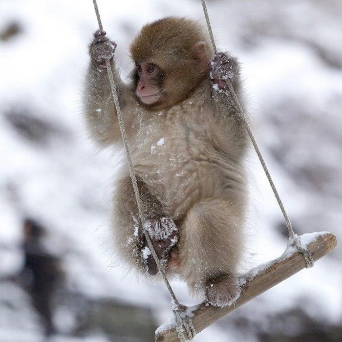 Картинки и фото обезьян - приколы, юмор, смех, с надписями 13
