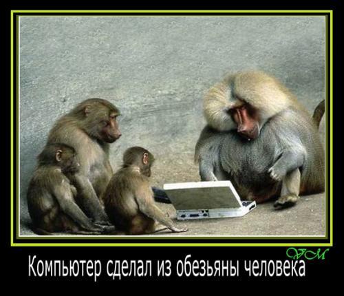 Картинки и фото обезьян - приколы, юмор, смех, с надписями 3