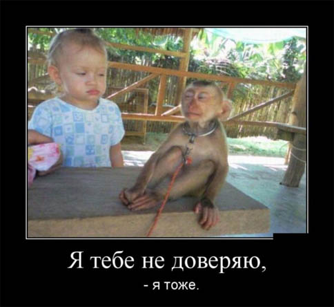 Картинки и фото обезьян - приколы, юмор, смех, с надписями 4