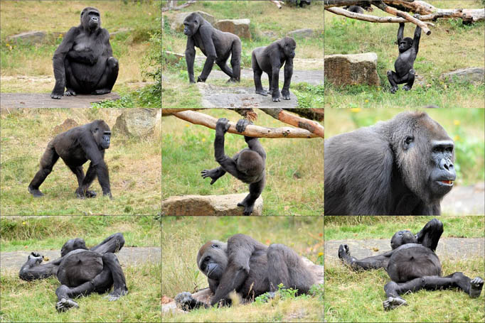 Картинки и фото обезьян - приколы, юмор, смех, с надписями 5