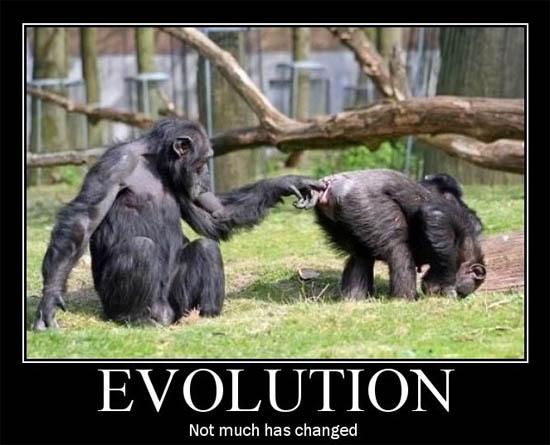 Картинки и фото обезьян - приколы, юмор, смех, с надписями 6