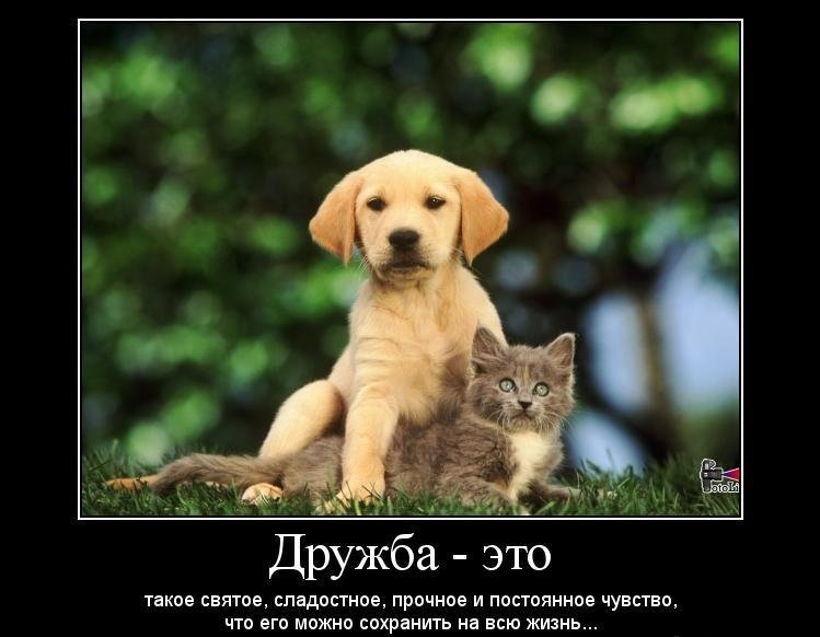 Картинка о дружбе со смыслом