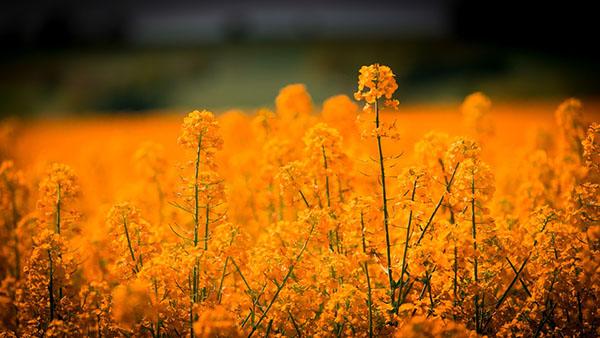 Красивые картинки лета - смотреть бесплатно, скачать онлайн 12