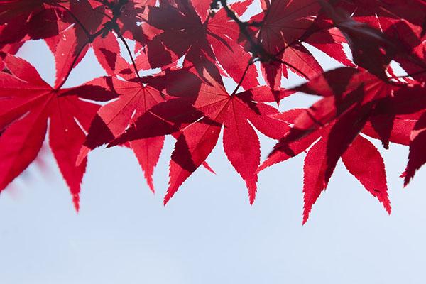 Красивые картинки лета - смотреть бесплатно, скачать онлайн 15