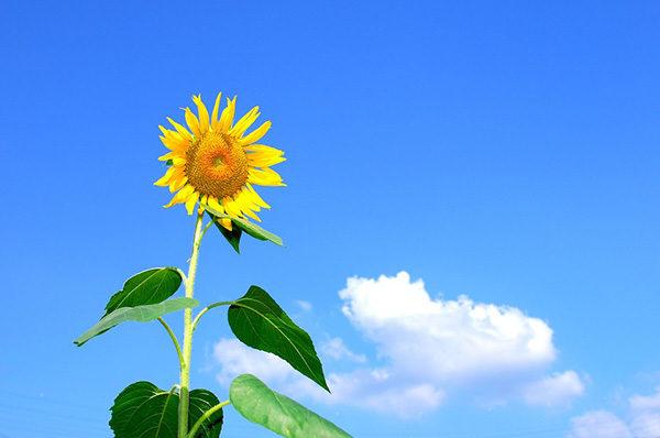 Красивые картинки лета - смотреть бесплатно, скачать онлайн 5