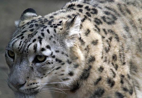 Невероятные картинки животных - красивые, удивительные 1