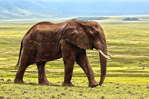 Невероятные картинки животных - красивые, удивительные 10