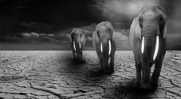 Невероятные картинки животных - красивые, удивительные 11