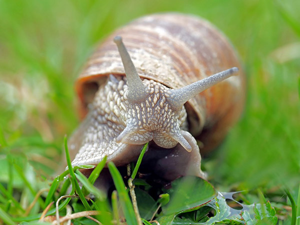 Невероятные картинки животных - красивые, удивительные 2