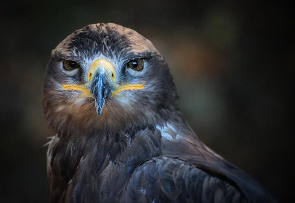 Невероятные картинки животных - красивые, удивительные 5