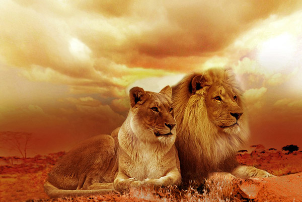 Невероятные картинки животных - красивые, удивительные 7