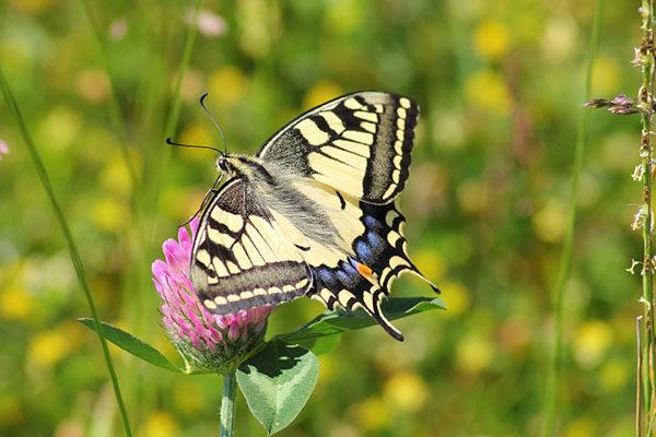 Прикольные и красивые картинки лета, животных - смотреть бесплатно 1