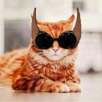 Прикольные и смешные фото животных - смотреть с надписями 10