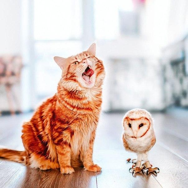 Прикольные и смешные фото животных - смотреть с надписями 12