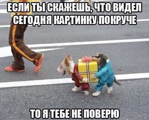 Прикольные и смешные фото животных - смотреть с надписями 3