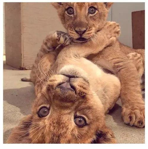 Прикольные и смешные фото животных - смотреть с надписями 8