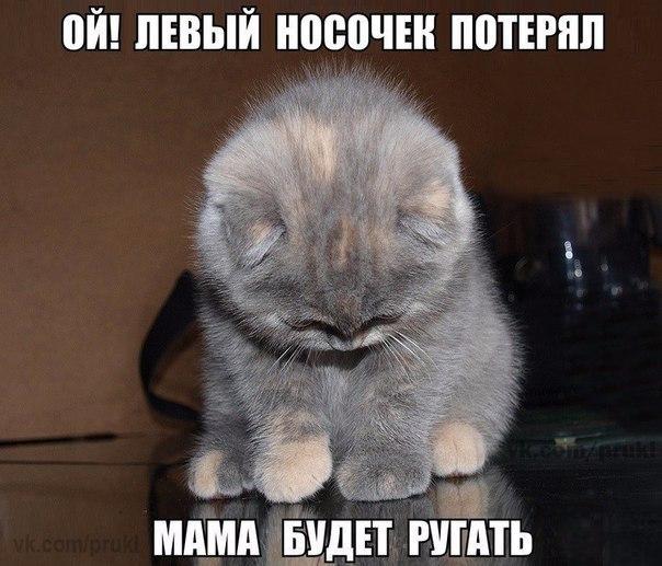 Прикольные и смешные фото животных - смотреть с надписями 9