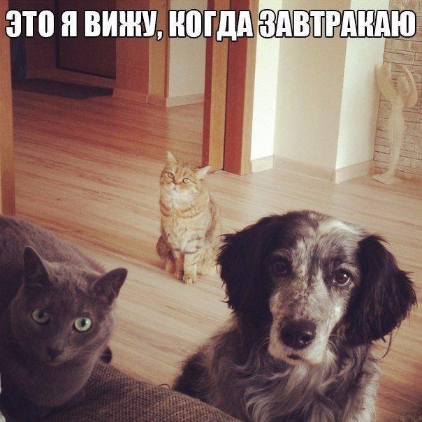 Ржачные и смешные картинки про животных до слез - смотреть онлайн 1