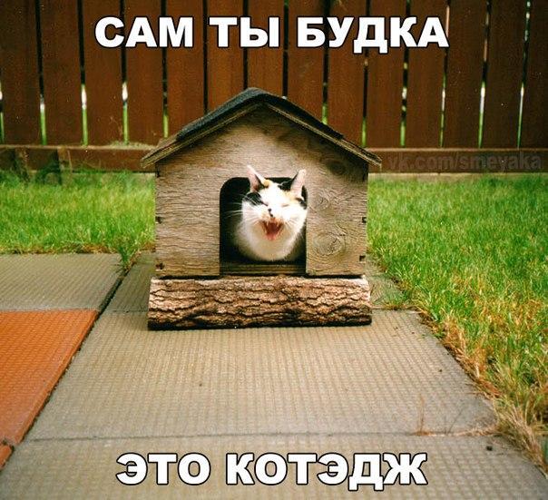 Ржачные и смешные картинки про животных до слез - смотреть онлайн 14