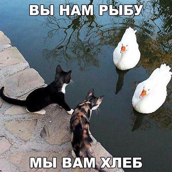 Ржачные и смешные картинки про животных до слез - смотреть онлайн 2