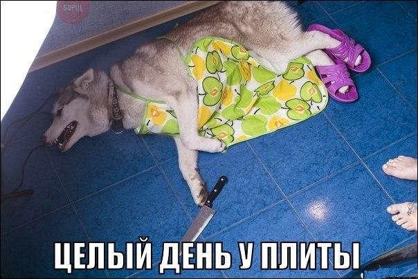 Ржачные и смешные картинки про животных до слез - смотреть онлайн 7