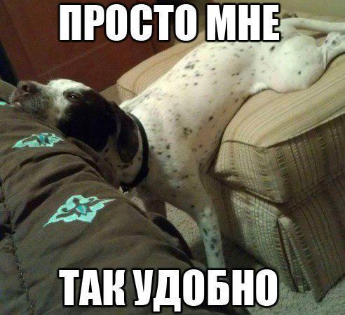 Ржачные и смешные картинки про животных до слез - смотреть онлайн 9