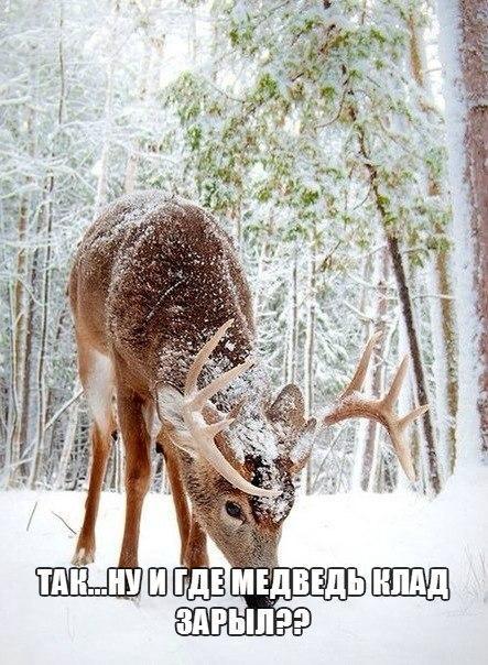 Ржачные и смешные картинки про животных - смотреть онлайн 1