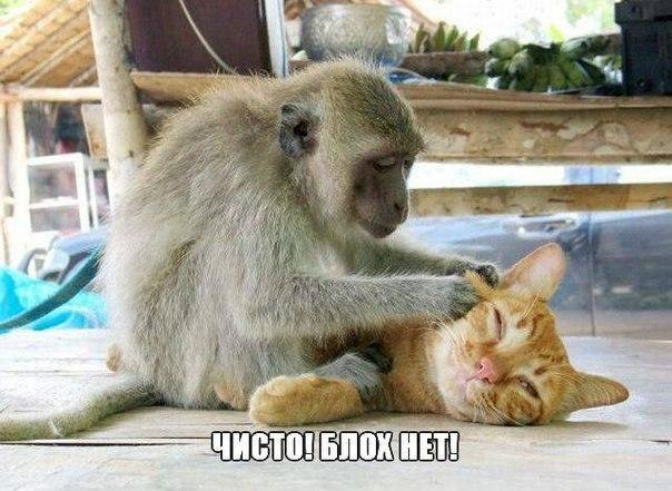 Ржачные и смешные картинки про животных - смотреть онлайн 10