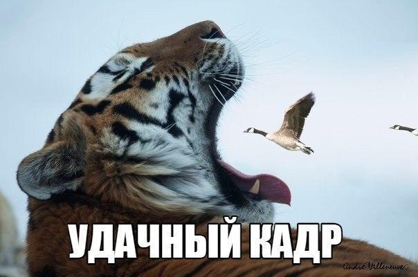 Ржачные и смешные картинки про животных - смотреть онлайн 12