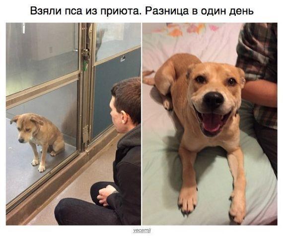 Ржачные и смешные картинки про животных - смотреть онлайн 4