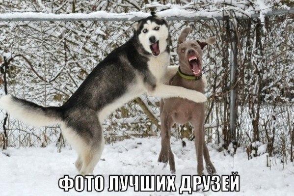 Ржачные и смешные картинки про животных - смотреть онлайн 6