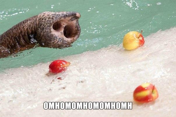Ржачные и смешные картинки про животных - смотреть онлайн 8