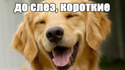 Смешные анекдоты до слез, короткие, веселые - читать онлайн заставка